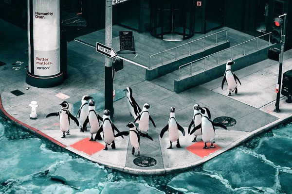 Invasão Pinguim.