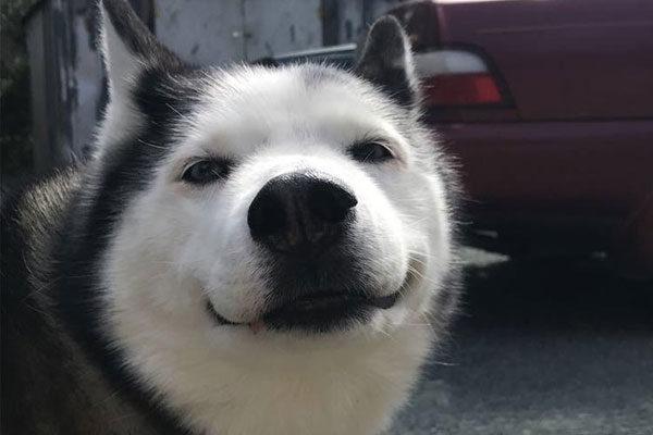 Quero ver um sorriso