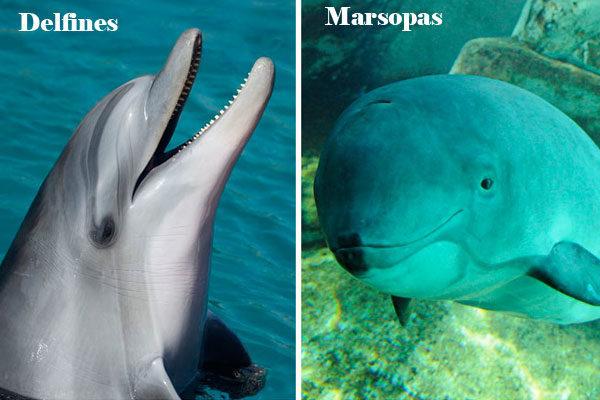 Golfinhos e toninhas