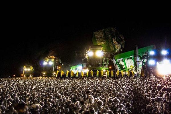 Um monte de algodão