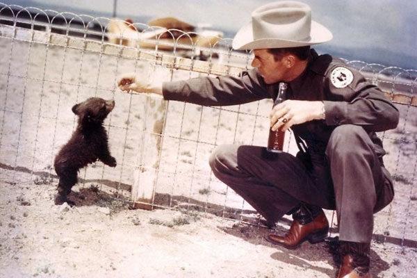 Inspiração real de Smokey o Urso, 1950