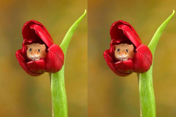 Dentro das tulipas