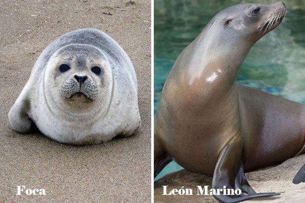 Foca e leão marinho