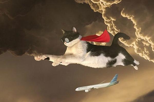 O gato voador