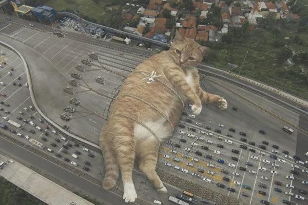 Parando o trânsito