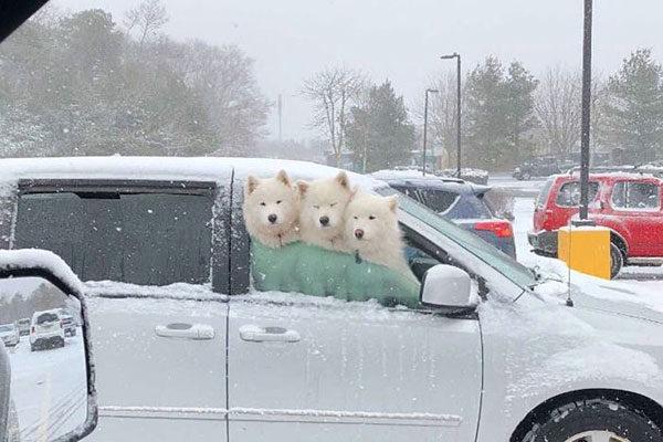 Curtindo a neve