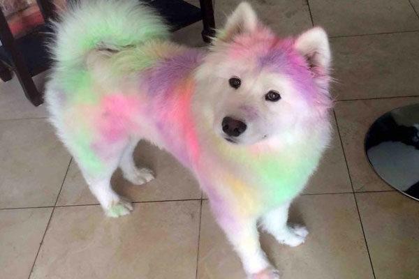 Muitas cores