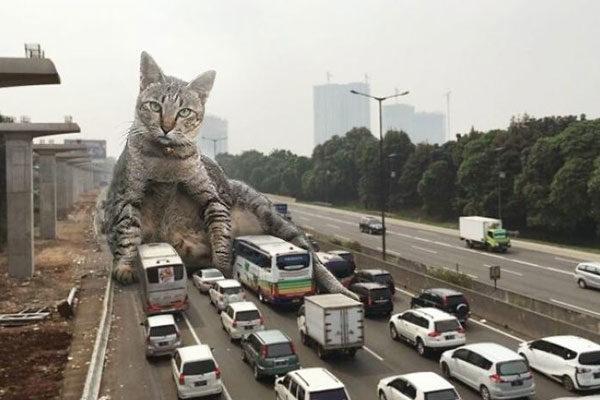 Criando trânsito
