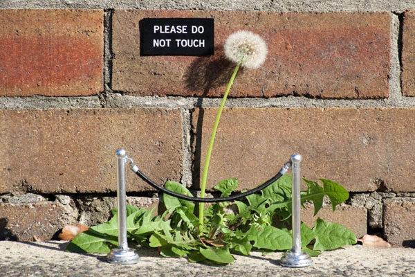 Por favor, não toque